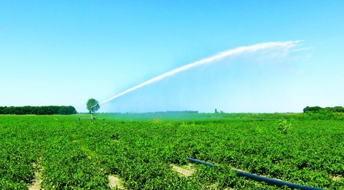 Irrigazione professionale