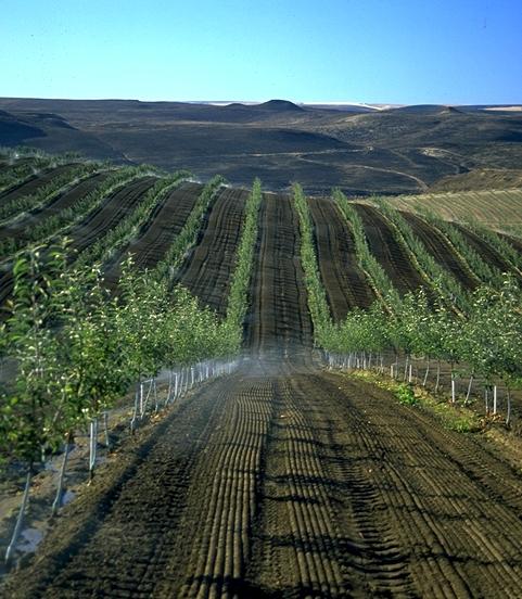 Irrigazione1-5
